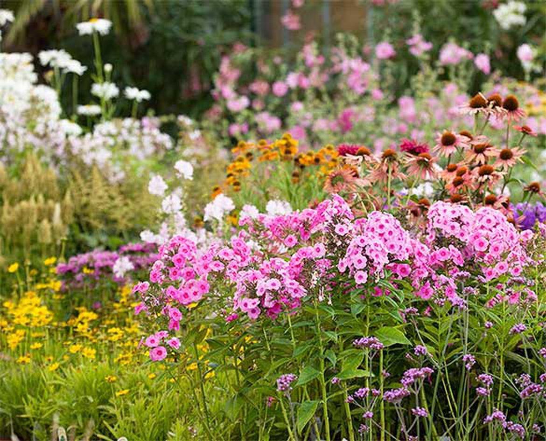 plantes vivaces 1170x0 q85 subject location 292 237 subsampling 2 upscale