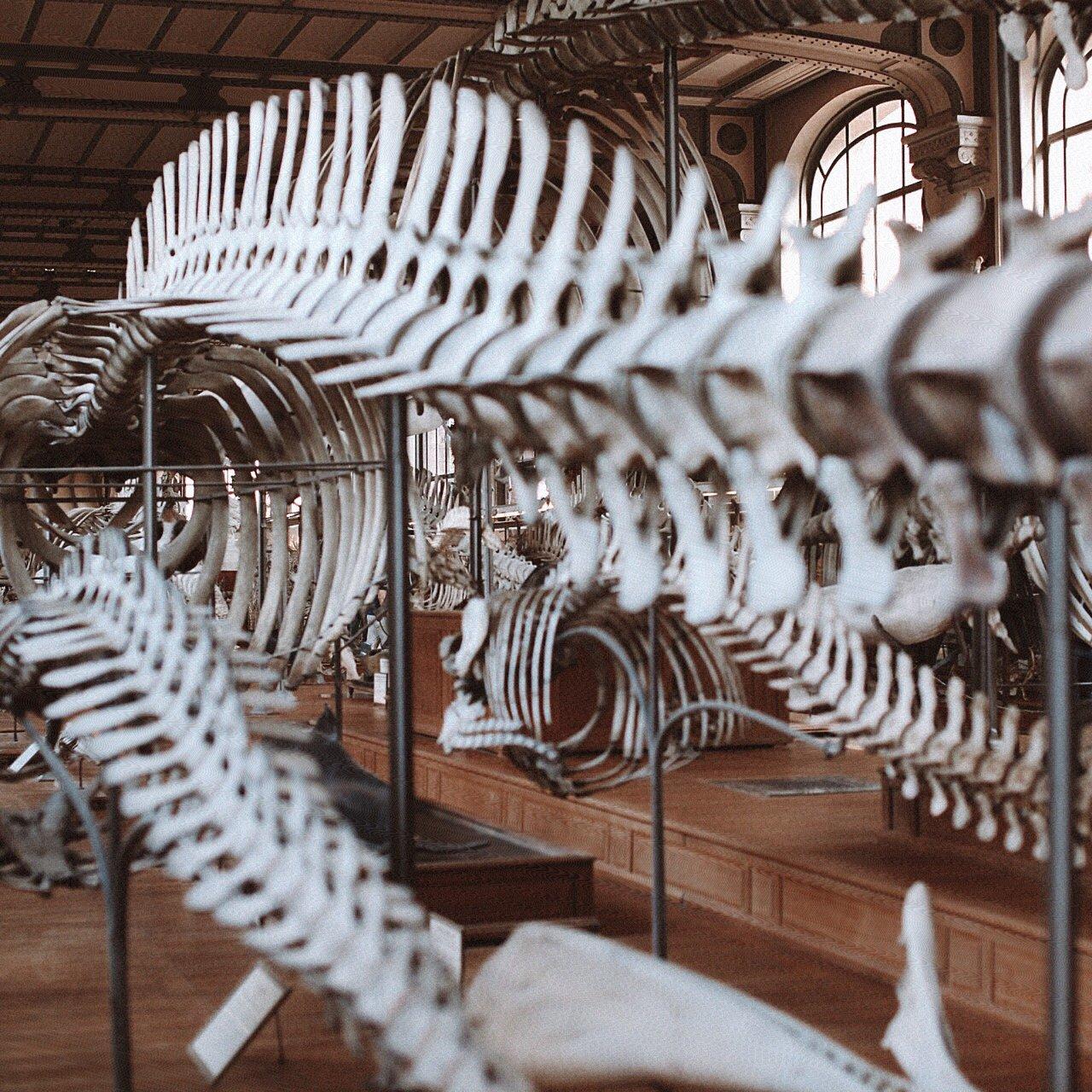 grande galerie de l evolution