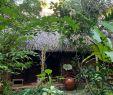 Salon De Jardin Garden Charmant Jardin Du Mekong Homestay $44 $̶6̶1̶ Prices & Guest