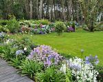 84 Génial Agapanthe Jardin