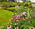Agapanthe Jardin Luxe Fleurs Fruits Légumes Jardins Déco