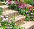Aménagement Allée De Jardin Génial Flowery Rockery Tajomstvá ºspeÅ¡nej Alpskej Záhrady V 70