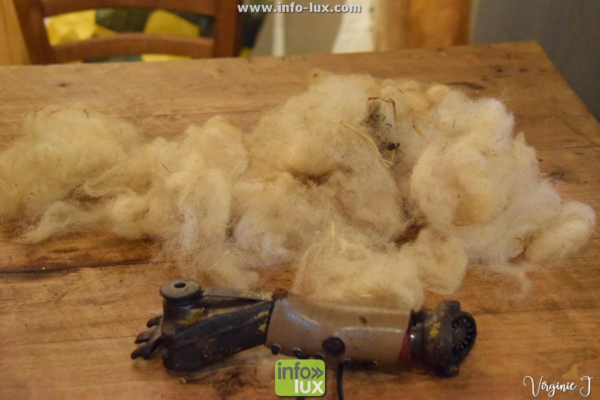 animal laine