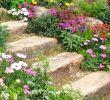 Aménagement Jardin Petite Surface Charmant Цвеће Роцкери тајне успјешне аРпске баште у 70 ДИИ идеја