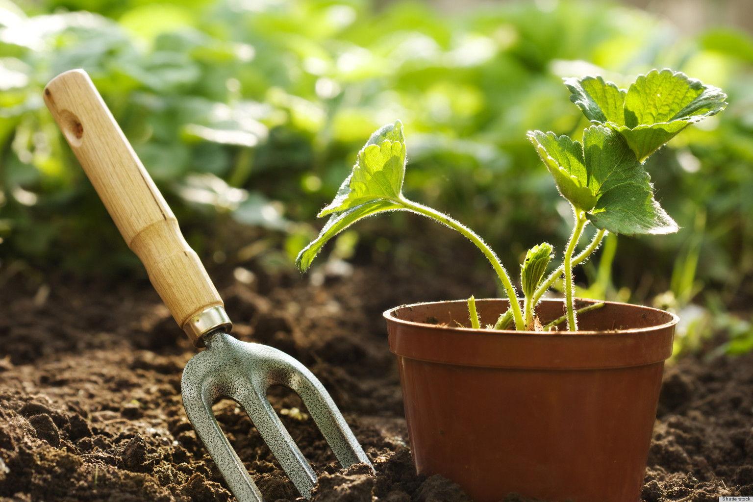 préparer la terre pour pouvour ensuite planter des plantes idée emnt aménager son jardin