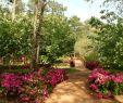 Aménager son Jardin Frais Vrtnarjenje Ni Raketna Znanost Dokaz V 99 Fotografijah In
