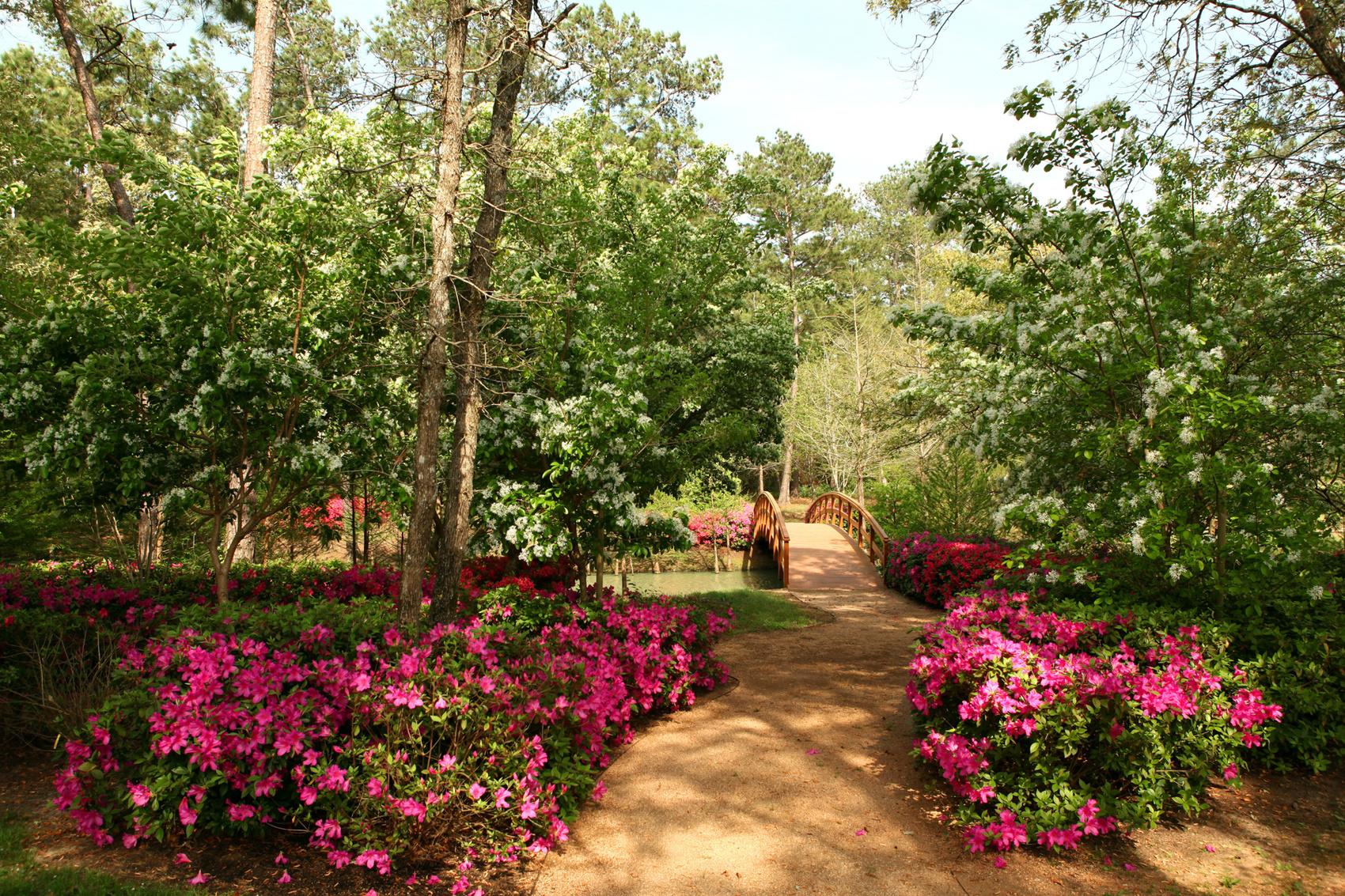 aménager son jardin udée de jardin style japonais plusieurs fleurs couleur fuschia petit pont et plusieurs arbres verts
