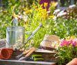 Aménager son Jardin Inspirant Vrtnarjenje Ni Raketna Znanost Dokaz V 99 Fotografijah In