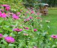 Aménager son Jardin Luxe Vrtnarjenje Ni Raketna Znanost Dokaz V 99 Fotografijah In