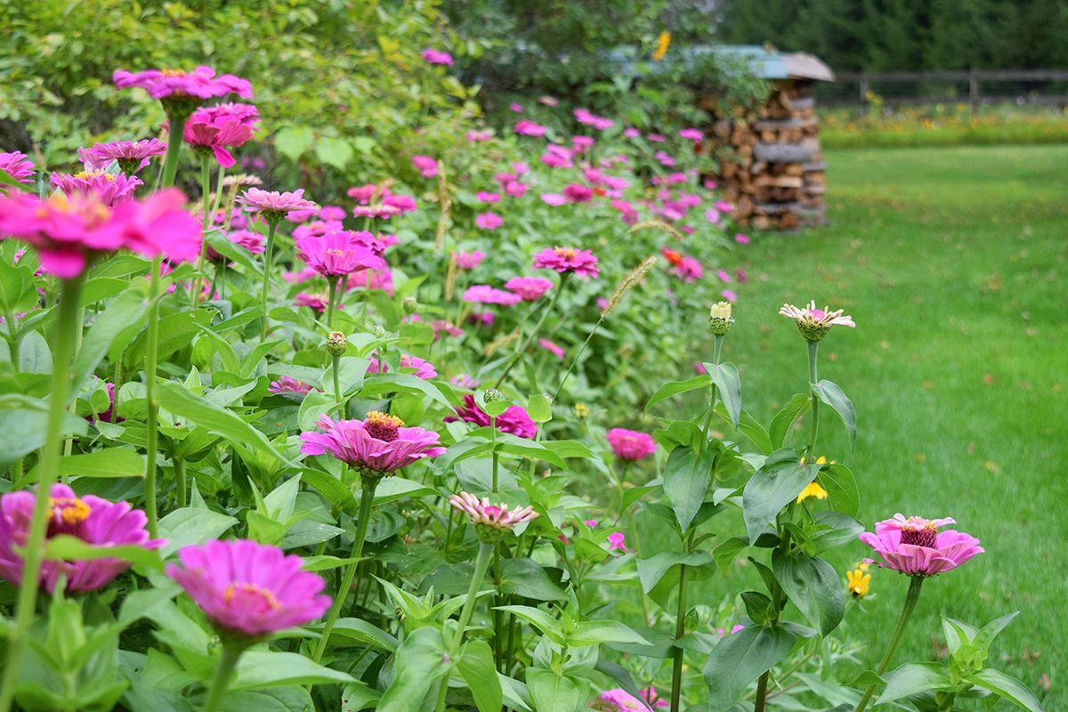 amenager des fleurs en bordure plusieurs plantes colorées bordant un gazon vert idee deco jardin
