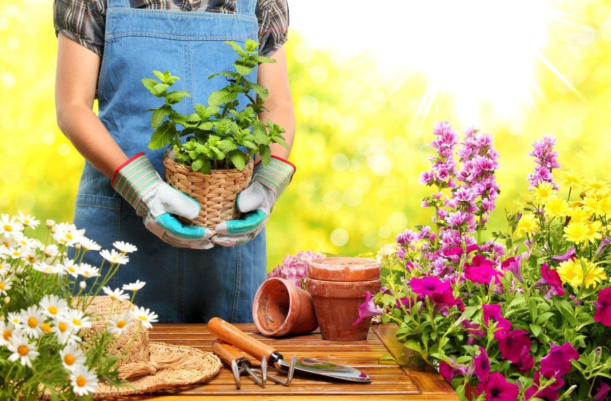 choisir les bonnes plantes pour aménager son jardin planter des fleurs en pots dans la terre amenagement jardin fleurir son jardin