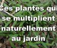 Aménager son Jardin Pas Cher Unique Aménagement D Une Terrasse Parisienne Plantiste épisode