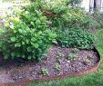 Amenager Un Jardin Best Of 100 [ Kit Haie Fleurie ]