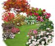 Amenager Un Jardin Charmant 100 [ Kit Haie Fleurie ]