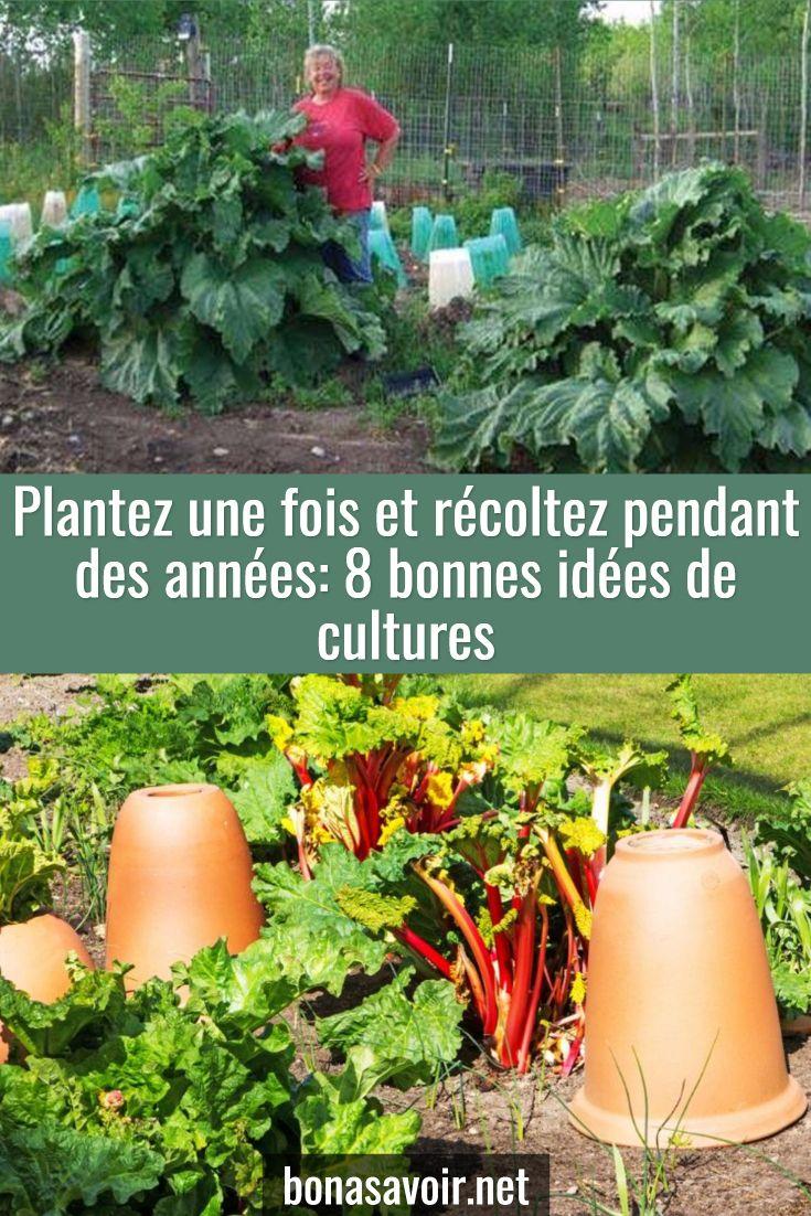 Astuce Jardin Frais épinglé Par Gravouil Sur Jardinage