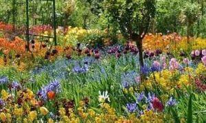 80 Best Of Au Jardin Fleuri
