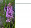 Avis Habitat Et Jardin Beau Uses Primary Data Typeset Gibf Data Training Manual En V1
