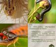 Blattes De Jardin Inspirant N°139 Les Myriapodes