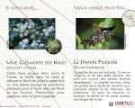27 Unique Blattes De Jardin