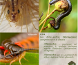 Cafard De Jardin Génial N°139 Les Myriapodes