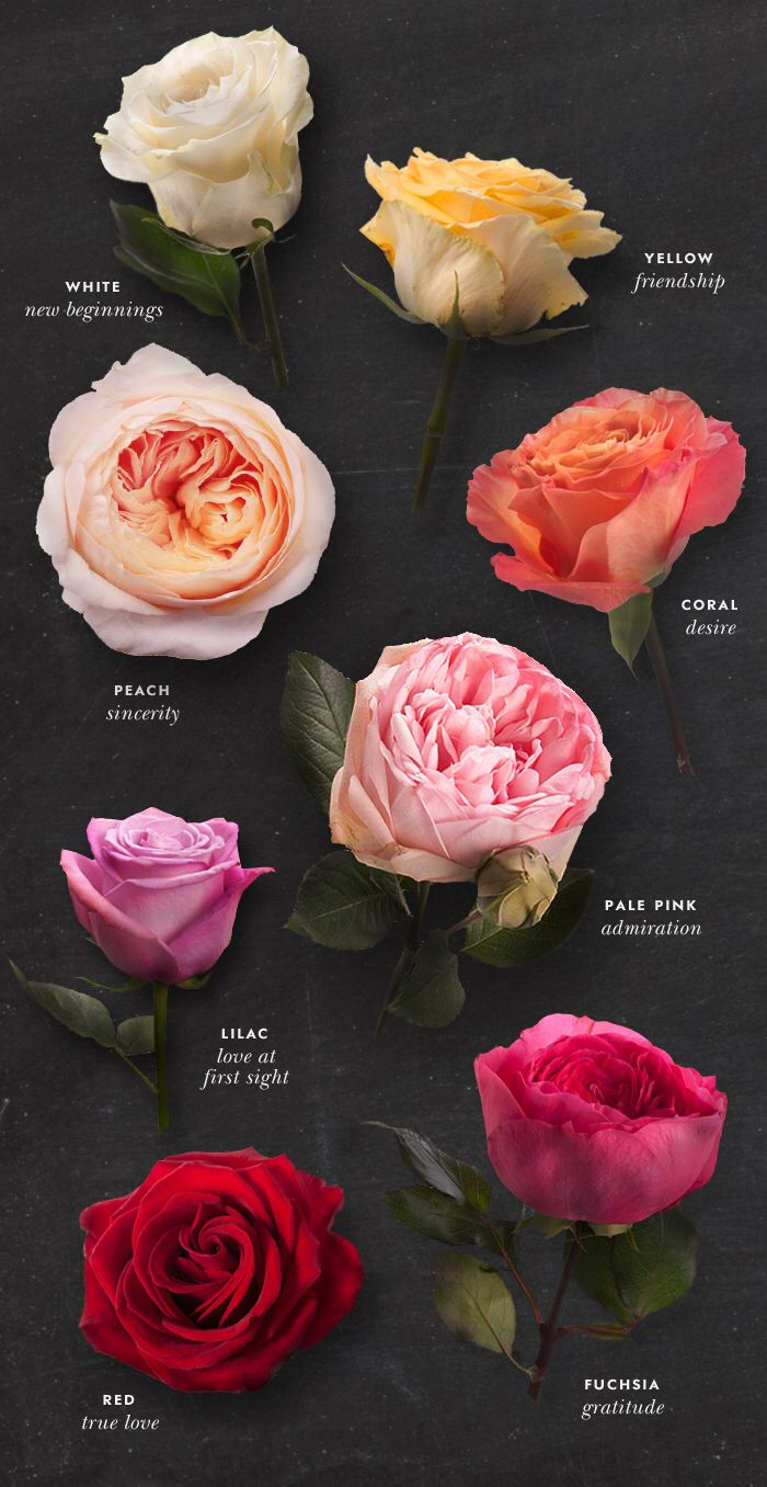 Crapaud Dans Le Jardin Signification Beau the Meaning Behind Each Rose Of 45 Luxe Crapaud Dans Le Jardin Signification
