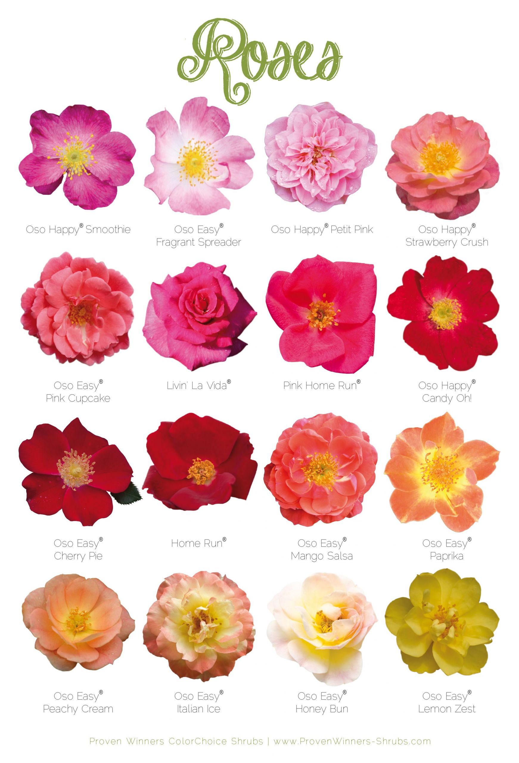 Crapaud Dans Le Jardin Signification Génial 16 Long Blooming Low Maintenance Roses for Your Landscape Of 45 Luxe Crapaud Dans Le Jardin Signification