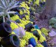 Création Jardin Frais วิธีการที่จะมีสวนที่ลาดเอียง ความคิดที่น่าสนใจในรูปถ่ายและ
