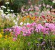 Decorer son Jardin Avec Des Pierres Unique Les Plantes Vivaces Les Alliées De Votre Jardin