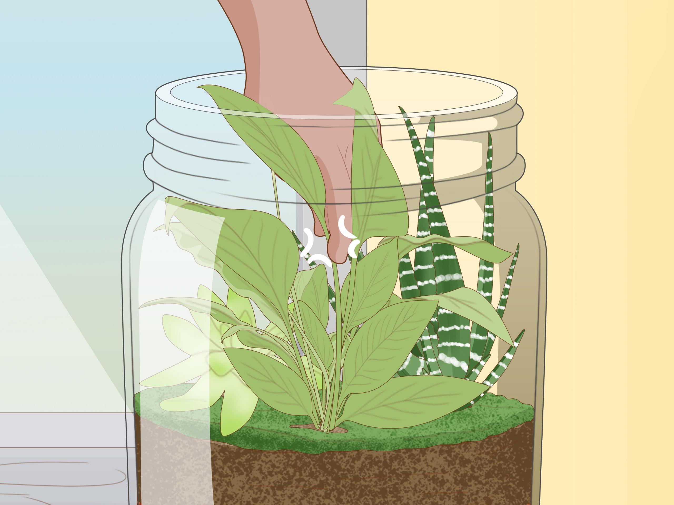 Grow a Garden in a Bottle Step 17