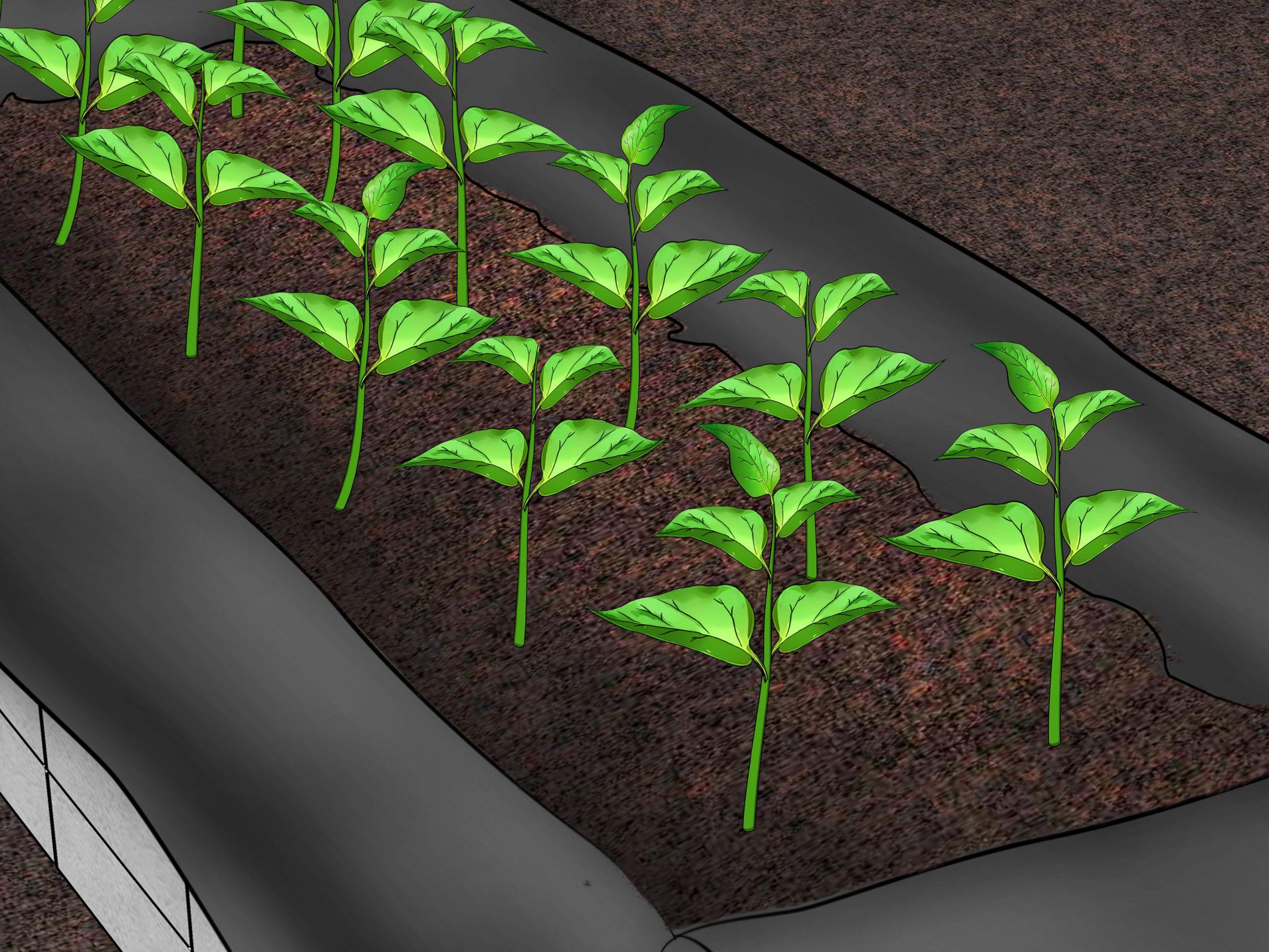 Build Raised Ve able Garden Boxes Step 21