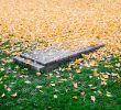 Enterrer son Chat Dans son Jardin Nouveau Chien Ou Chat Décédé Que Faire Du Corps Incinération