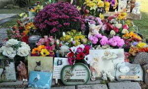 27 Beau Enterrer son Chat Dans son Jardin