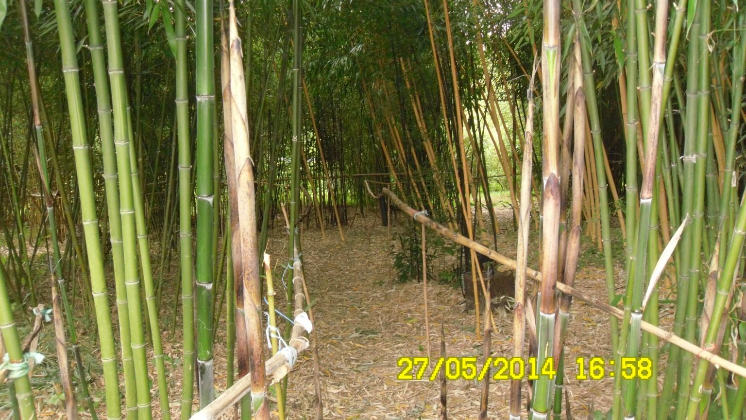 jardin de bambous NET 14 2 JPG