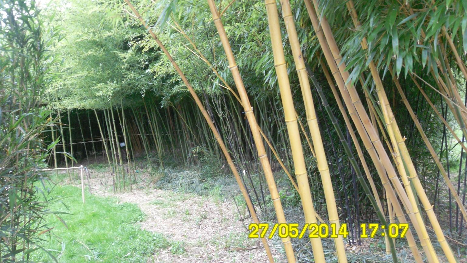 jardin bambousNet14 JPG