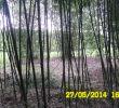 Entrée Jardin D Acclimatation Inspirant Webambous New
