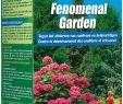 Faire Une Dalle Pour Abri De Jardin Nouveau Engrais Fenomenal Garden 75 Gr Kb Mr Bricolage