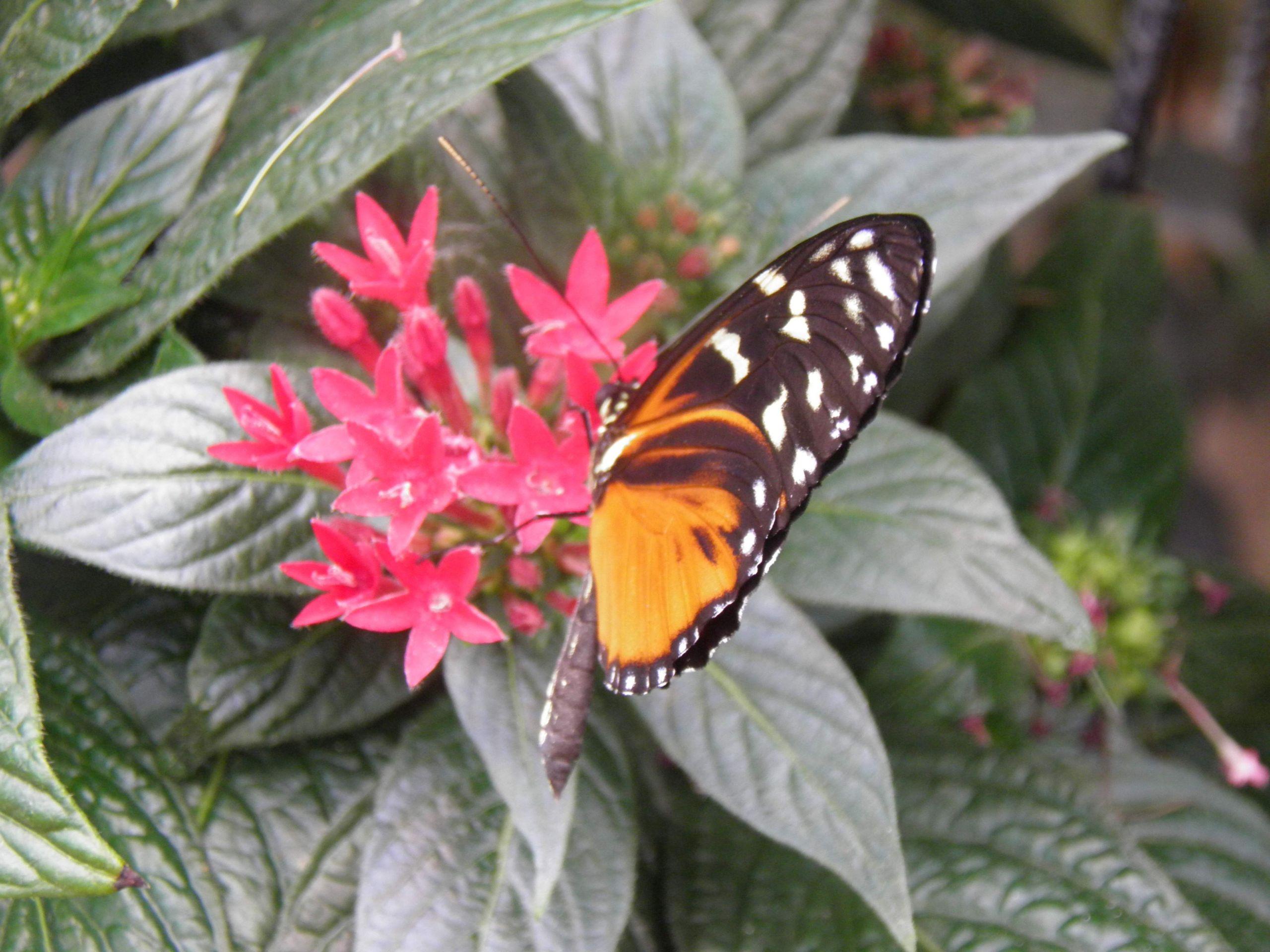 Fleur et papillon animal 23