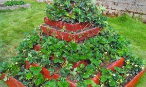 27 Unique Fraiseuse Jardin