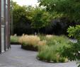 Idee Amenagement Jardin Inspirant Discover Strategies to Create Your Garden Bloom Better