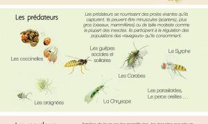 70 Génial Insectes Du Jardin