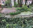 Jardin Autour Piscine Élégant Jardin Sauvage De St Vincent Paris 2020 Ce Qu Il Faut