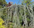 Jardin Botanique Bayeux Élégant Jardin Botanique Saverne 2020 All You Need to Know