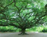 32 Inspirant Jardin Botanique Bayeux