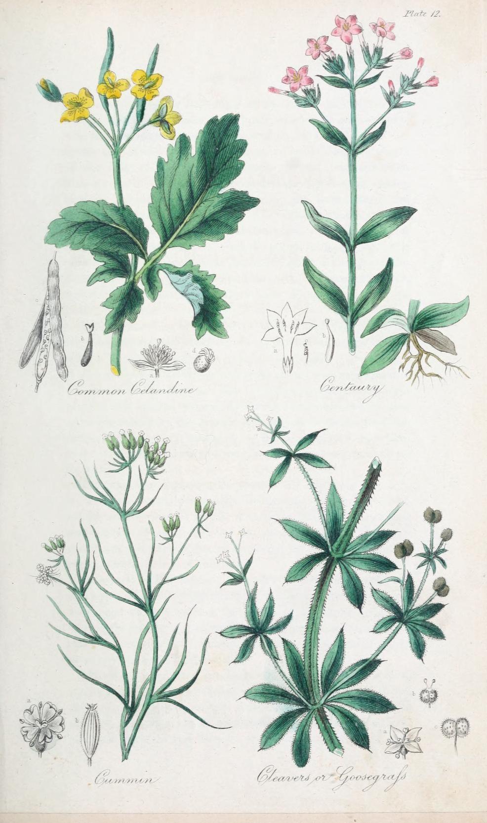 Jardin Botanique Best Of 1 the British Flora Medica or History Of the Medicinal