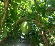 Jardin Botanique Best Of Jardin D Eden Saint Gilles Les Bains 2020 All You Need