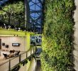 Jardin Botanique Best Of why Amazon Built Its Workers A Mini Rain forest Inside Three