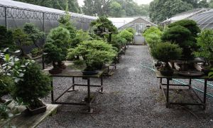 23 Frais Jardin Botanique Brooklyn