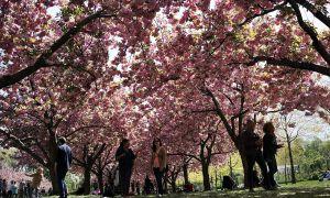 91 Nouveau Jardin Botanique De Brooklyn