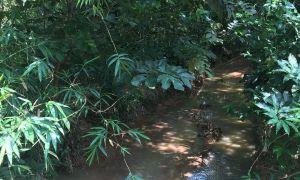 62 Inspirant Jardin Botanique De tours