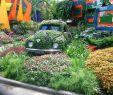 Jardin Botanique Élégant Flesh Gordon Beetle Man Swordfight